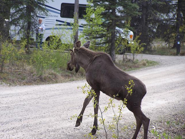 Day12_Moose
